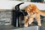 ¿Cómo puede evitar que su gato derrame agua?