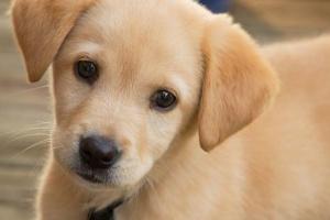Síntomas de las Alergias de la Piel del Perro