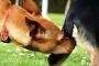 Por qué es imprescindible dejar que nuestros perros huelan los traseros de los demás