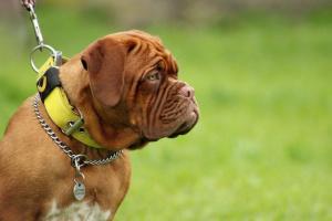 Rastreadores de actividad de mascotas y todo lo que necesitas saber.