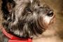 ¿Qué son las leyes de Harvey y los veterinarios obtener escaneo?