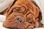 ¿Por qué los perros roncan?