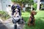 5 maneras en que su bebe y su perro puedan interactuar, y cómo ayudar a mantener a todos a salvo