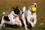 Comportamiento social de los perros