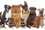 Los perros y su genetica