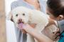 Ursodiol para perros: usos, dosis y efectos secundarios.