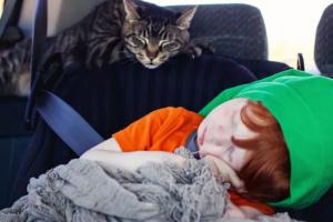 5 tips que pueden ayudar a que su gato disfrute los viajes en carro