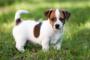 ¿Debo obtener un seguro de mascotas?