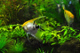 Descripción y características físicas de los peces