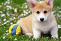 Cáncer de pulmón (adenocarcinoma) en perros