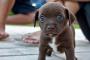 Síntomas de sarna en cachorros