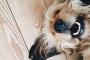 Los 10 signos de cáncer en los perros