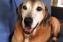 Anécdotas: perro sonriente: tweeter