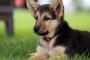 Cómo saber si un cachorro es sordo