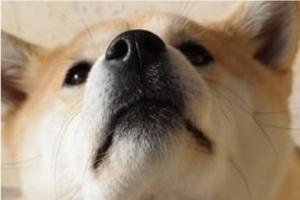 ¿Qué significa cuando la nariz de mi perro está caliente?