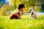 Comportamiento del perro: Consejos para entrenar a su perro para situaciones sociales