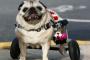 5 maneras de ayudar a perros menos adoptables en su comunidad.
