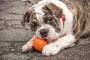 DIY Pet Treats Recipes para celebrar la Semana Nacional de Hornear
