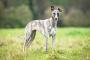 Consejos de seguridad para usar Medicamentos preventivos en perros