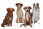 ¿Cuáles son los síntomas del entropión del perro?