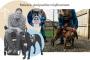 Entrenando a los pitbulls rescatados como perros de servicio para personas con discapacidades