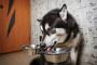 El perro tose después de beber ¿Qué está pasando?