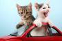 Consejos para viajar con su gato sin que se estrese