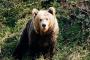 Los osos y la seguridad que debe tener al visitar su hábitat