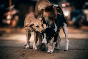 ¿Tienes un cachorro agresivo? Aquí están los signos