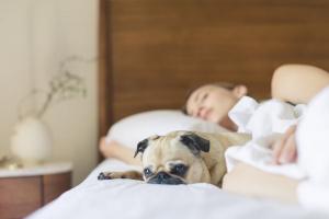 5 consejos para aliviar rápidamente una alergia de perro