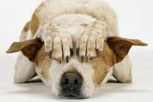 Paso nasal estrecho en perros
