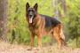 Cáncer de médula ósea (mieloma) en perros