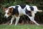 Infección del tracto urinario (ITU) en perros: síntomas, causas y tratamientos.
