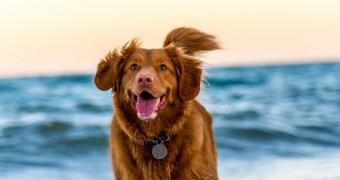 Fenómeno de Schiff-Sherrington en perros