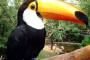 Infección del tracto digestivo viral en aves