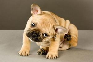 Problemas de vejiga en perros