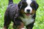 Depósitos de calcio en el tracto urinario en perros