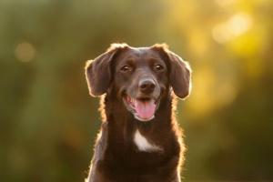 Anomalías del cráneo y la médula espinal en los perros