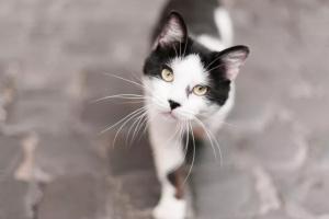 Lo que debe saber antes de sacar a su gato al exterior