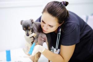 7 datos respecto a obtener una póliza de seguros para su perro
