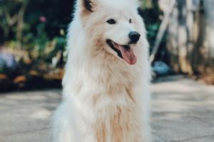 La incidencia de intoxicación por naftalina en las mascotas