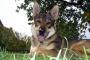 ¿Qué son los parásitos en los perros?