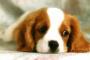 Dieta congelada cruda para perros
