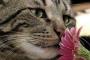 ¿Funciona el tratamiento con flores de Bach en gatos?