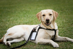 Sarcoma sinovial en perros
