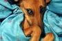 Fibrosis hepática en perros jóvenes