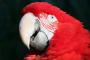 Las aves y su lenguaje corporal: las pupilas