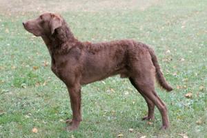 Parálisis en perros