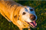 5 maneras de mantener a los perros mayores sanos