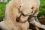 Los dermatólogos veterinarios ayudan a los perros a verse y sentirse mejor
